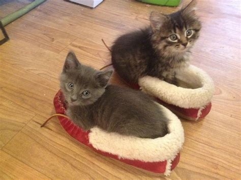kitten slippers cats part 58 30 pics 10 gifs amazing creatures