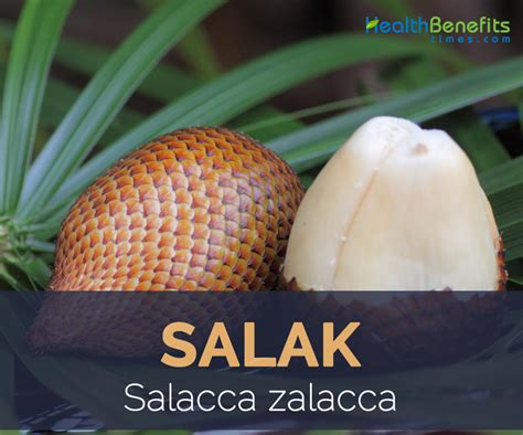 fruit facts salak fruit facts and health benefits