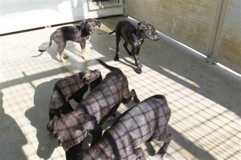 canile municipale pavia cuccioli abbandonati nuovo sos dal canile empoli la