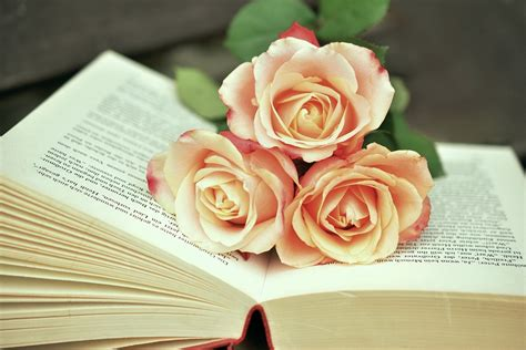 libro old roses أحلي صور ورد طبيعى حلوه جدا