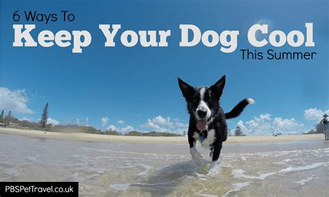 how to keep dogs cool in summer 6 ways to keep your cool this summer pbs pet travel