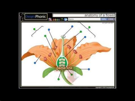 anatomia fiore anatomia di un fiore stame filamento antera stigma