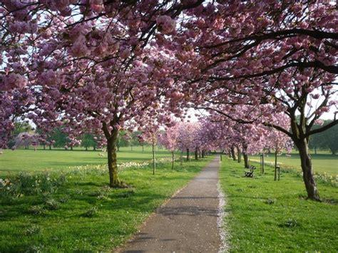 5 cherry tree walk cherry tree walk 169 ds pugh cc by sa 2 0 geograph britain and ireland