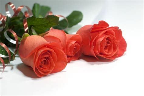 acquisto fiori on line piante on line fiori per cerimonie acquisto piante on line