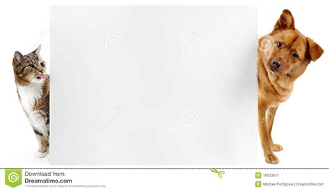 cat and cat and banner stock image image 16533511
