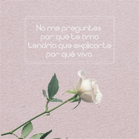 imagenes de salamandras blancas 7 im 225 genes de rosas blancas hermosas con frases de amor