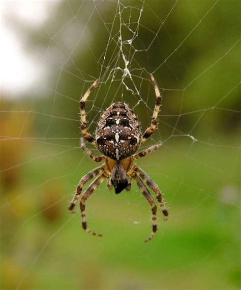 Garden Spider Is It Poisonous My Family Survival Plan The Do S And Dont S Of