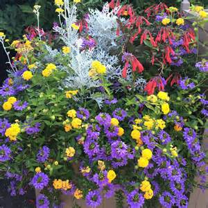 Perennial Climbing Plants With Flowers - goldberg amp rodler inc landscape design installation and care outdoor spaces blog