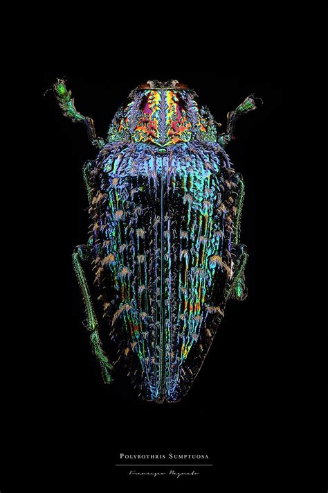 1419726951 microsculpture portrait of insects extraordinary macro portraits of insects by francesco