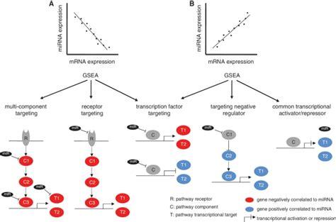 Mirna Set mechanistic models of mirna directed gene expression