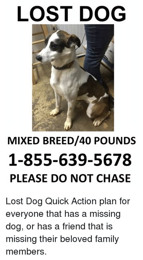 Lost Dog Meme - lost dog mixed breed40 pounds 1 855 639 5678 please do not