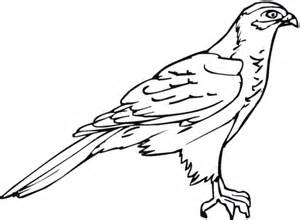 hawk coloring pages hawk 18 coloring page supercoloring