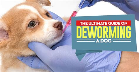 how much to deworm a puppy how to deworm a in 2018 an updated pet owner s guide
