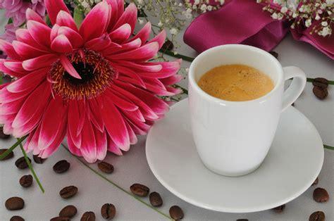 fiori coffee foto alpy cz coffe and flowers 04 2012