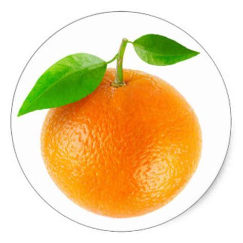 fruit rounds citrus stickers zazzle au