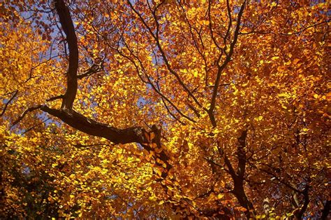 Why Do Trees Shed Their Leaves In Autumn by Stoked4life November 2012