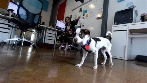 airbnb for dogs kevin baxpehler s newsletter featuring quot yeah everyone calls us an airbnb for dogs