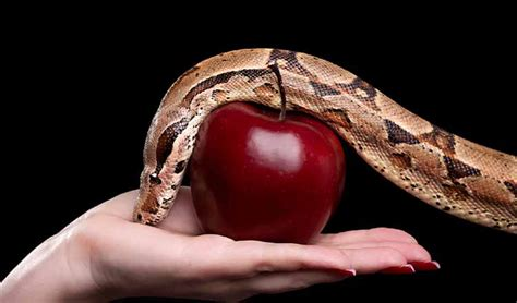 snake apple exual more common among in ministry than most