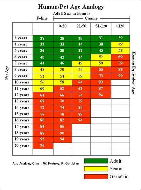 years in human find out your s relative age in human years with help from this aging chart
