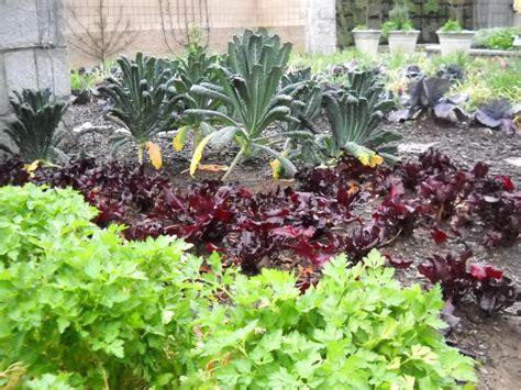 fall vegetable garden tips hgtv