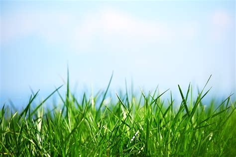 Grass L green enterprise about