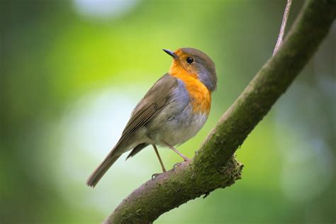 images gratuites la nature branche oiseau bokeh