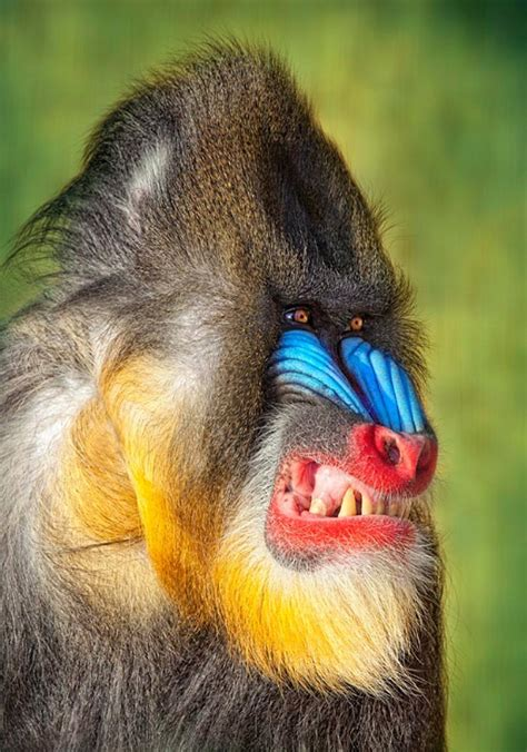 50 Colorful Animals Photography Inspiration Photos Colorful Animal