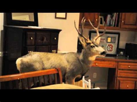 deer in house deer crashes into home on christmas eve youtube