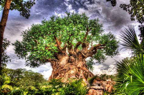 tree of life tree of life wallpapers atdisneyagain