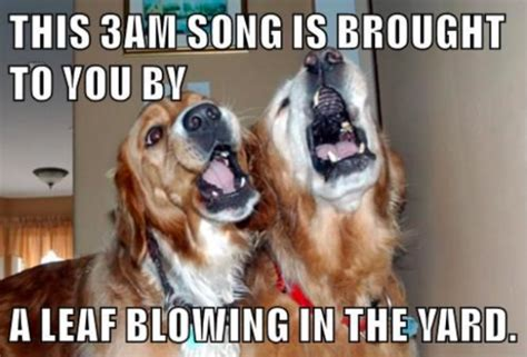 Dog Barking Meme - 16 signs your biological clock is set to quot dog quot barkpost