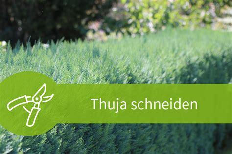 Thuja Wann Schneiden 5632 by Thuja Schneiden Anleitung Zum J 228 Hrlichen Thujaschnitt