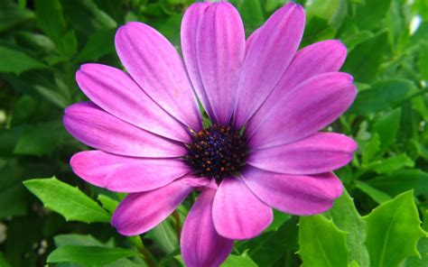 Beautiful Flower Pictures by Floare Purpurie
