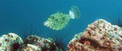 dive koh lipe koh lipe divers