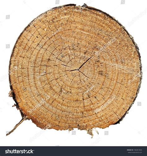 tree cross sections cross section of pine tree stock photo 106361834
