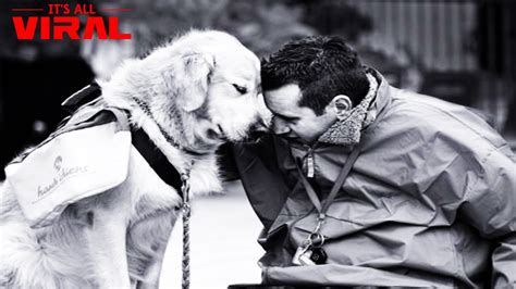dogs are loyal top 10 most loyal breeds