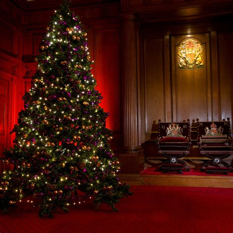 gallery of caring christmas trees edinburgh perfect