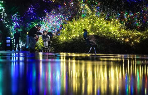 Seattle Area Holiday Lights Where To See Dazzling Zoo Light Seattle