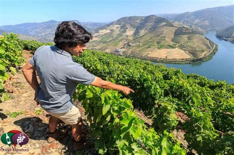 port the douro guides to wines and top vineyards books wine travel guide to douro valley portugal quintas port
