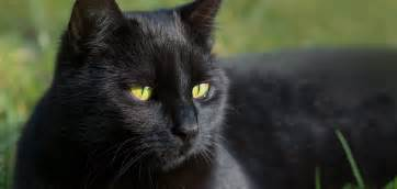 black cat day 27th oct 2017 days of the year