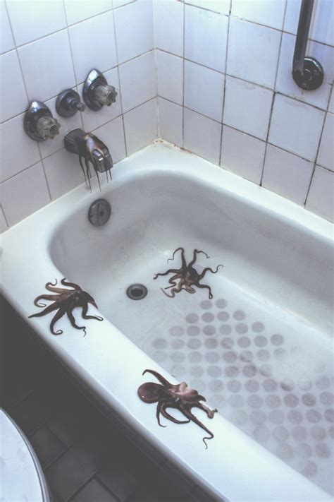 octopus in bathtub photography photo indie grunge octopus bathroom tub octopi