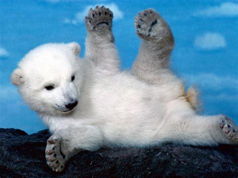 Imagenes Animales Polares | animales polares fauna 193 rtica