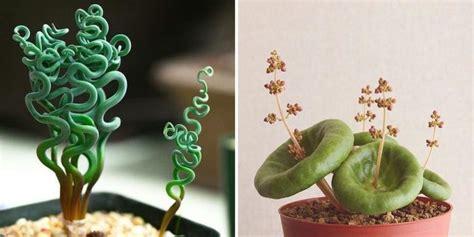 strange   beautiful houseplants   knew