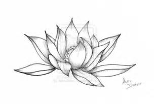 Lotus Flower Drawing Lotus Flower By Alexdicko On Deviantart
