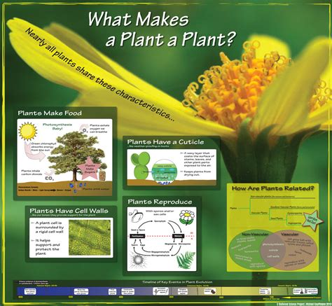 what is a planter what makes a plant a plant