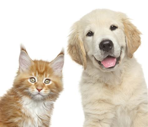cat and dogs gastrointestinal foreign bodies fb in dogs and cats medvet