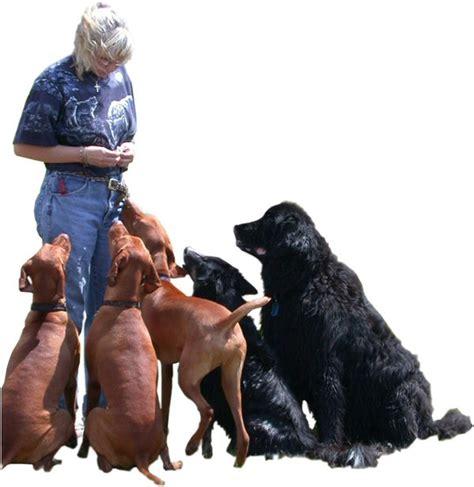 Canine Emotional Detox by Jeanine S Professional Meet Jeanine