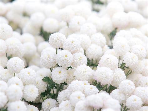 fiori da cimitero fiori per cimitero archivi carollo fiori