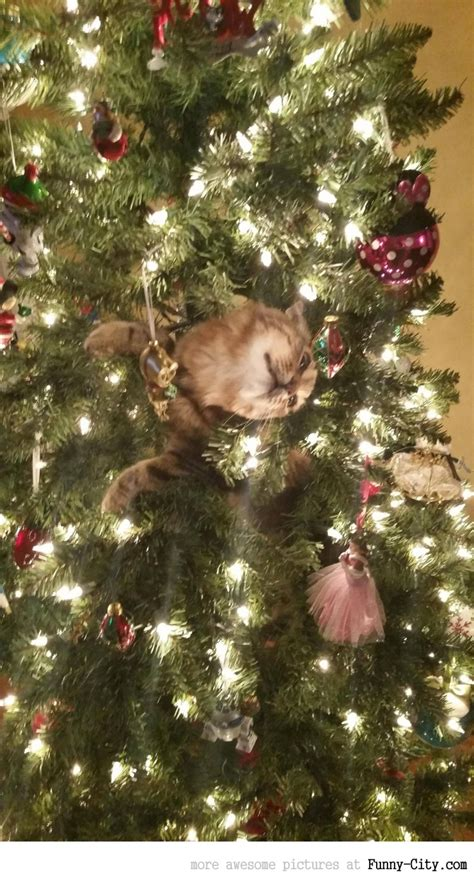 29 news bed bugs in christmas trees cats setting up trees 10 photos