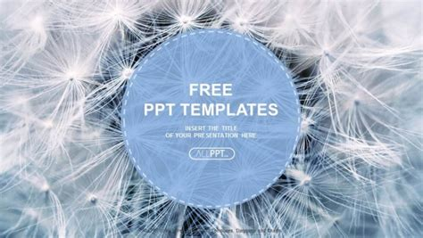 white templates for powerpoint free download black and white dandelion seeds with natural background