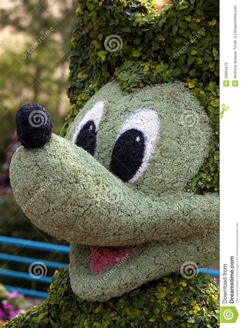 mickey mouse topiary editorial image image of topiaries 29964575